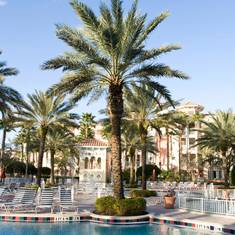 Palm vid pool i Orlando
