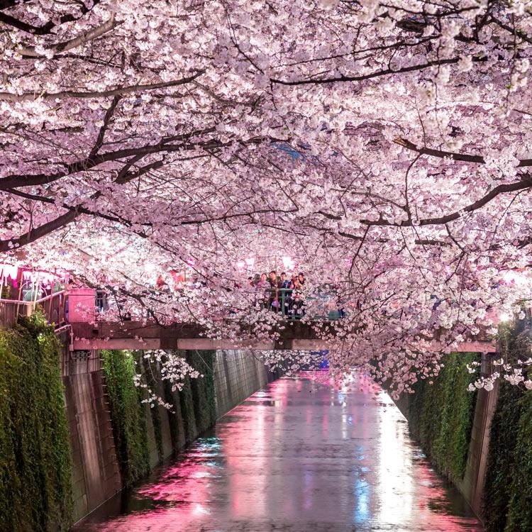 Bildresultat för japan resor